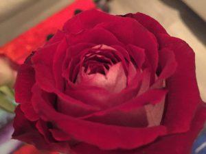 Meine Rose duftet noch : Loslassen von Missbrauch - Löschen von Zellerinnerungen aus dem Körper