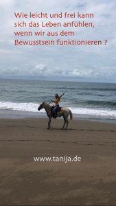 Bewusstsein Energie Freiheit Leichtigkeit Gesundheit Genuss und Körperbewusstsein mit Tanija Hammer - Inspiration zu einem Leben das zu Dir passt und Dein Potenzial und Lebenslust befreit. Lernen vom Bewusstsein der Pferde Reiten mit Leichtigkeit